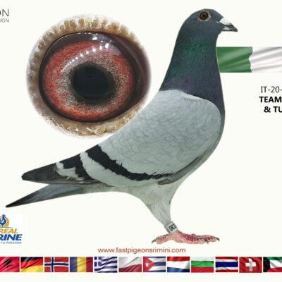 IT 20-063590 TEAM PATRU & TULBITA