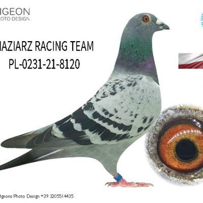 PL 0231-21-8120